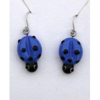 Berušky modrá