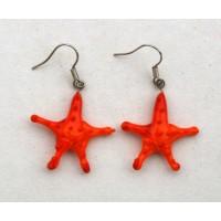 Ostatní - Hvězdice oranžová